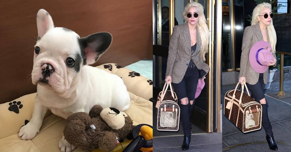 cd73aac00663 Lady A Totes Adorable Pup In Louis Vuitton Dog Carrier